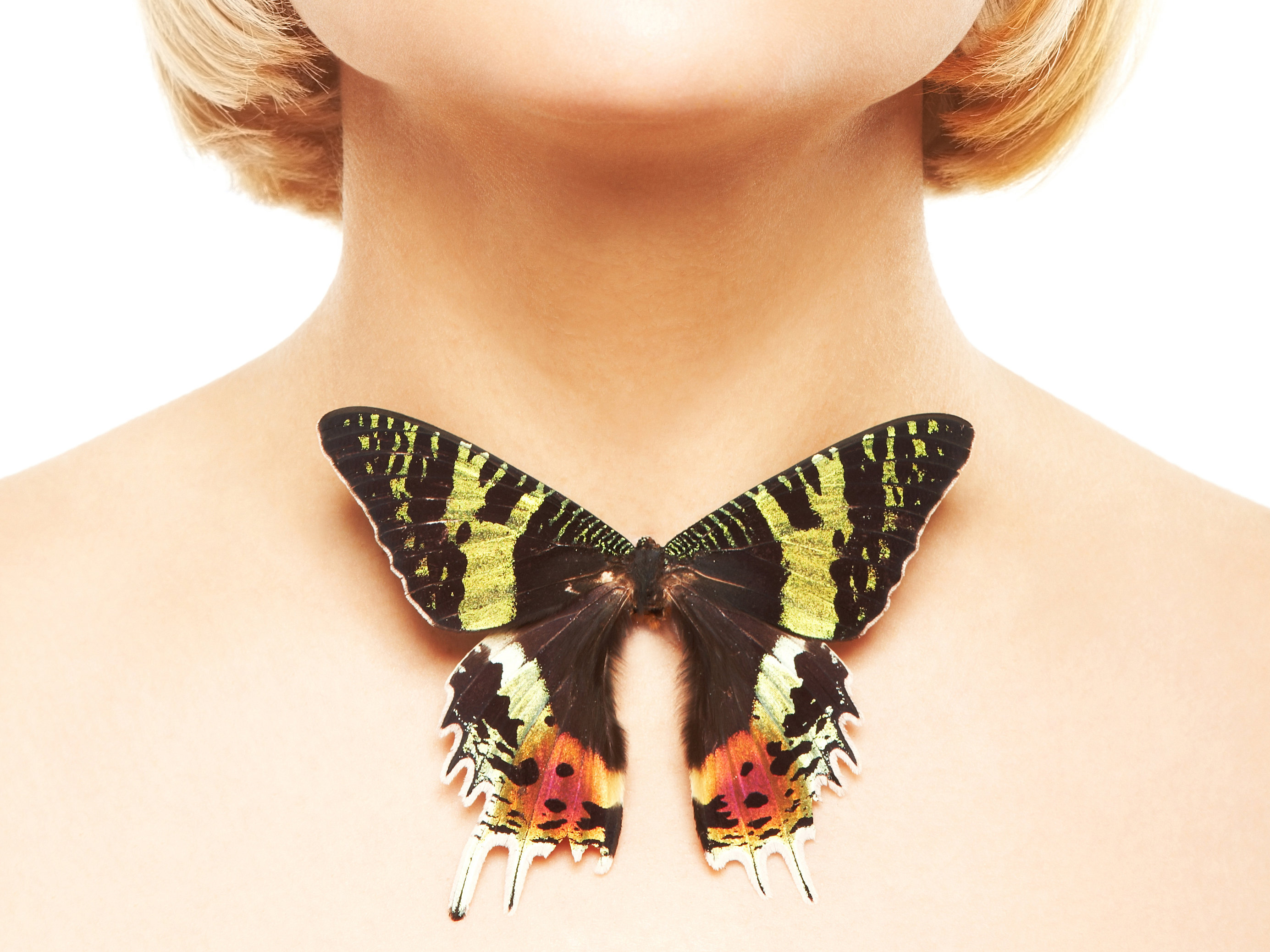 Your Thyroid: The Butterfly that Helps Your Body | Optimal Health Insider