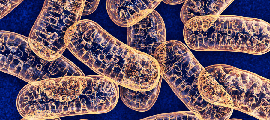 Get RAW with Your Mitochondria to Give Them a Boost