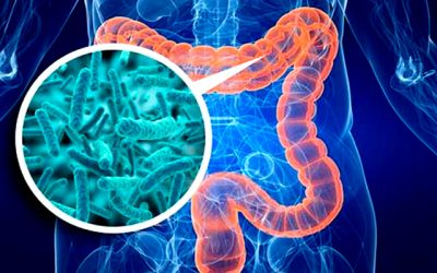Quality of gut bacteria influences COVID-19 severity, according to new study