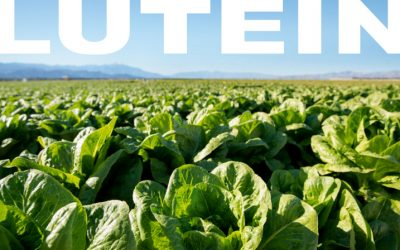Lutein intake by mothers linked to better child behavior