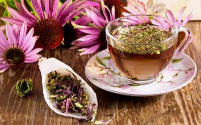 Introduction to Echinacea — America's favorite immune building herb