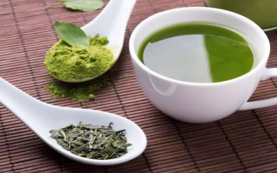 New Chinese study affirms cholesterol-lowering benefits of green tea