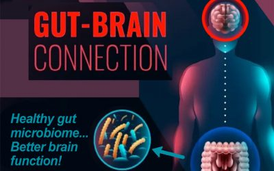 Healthy gut bacteria makes the brain 'younger' according to Irish study